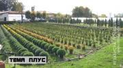U vlastitom rasadniku proizvode 40.000 biljaka /VIDEO/