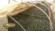 Kvalitetan rasadni materijal garancija za dobre rezultate u povrtarskoj proizvodnji /VIDEO/