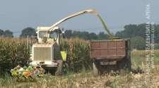 Semberski farmeri obezbijedili stočnu hranu, kvalitet silaže na zavidnom nivou /VIDEO/